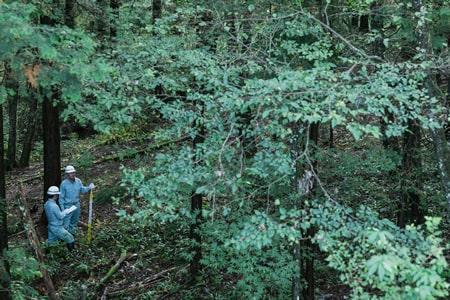 森林技術向上への研究の写真