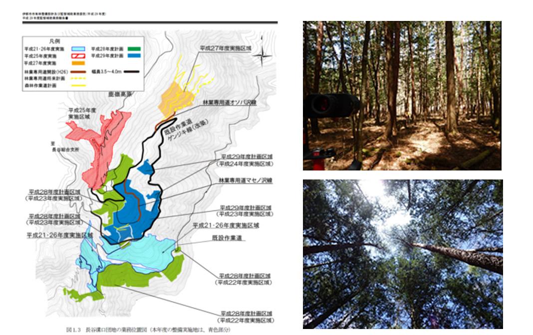 新宿区による伊那市 市有林整備の写真